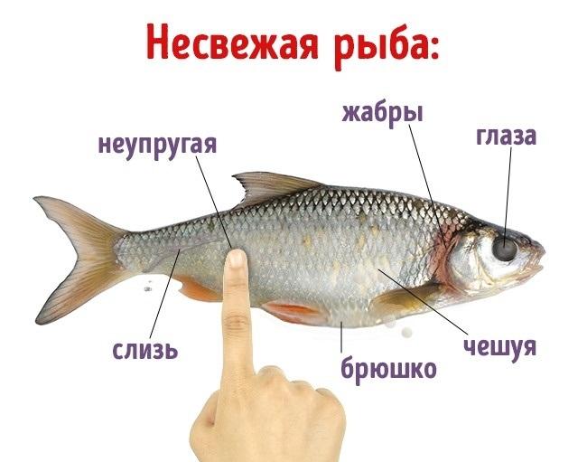 Признаки свежей и не свежей рыбы и рыбных консервов